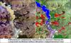 Новые алгоритмы тематической обработки спутниковых данных для мониторинга паводковой ситуации в Сибирском федеральном округе